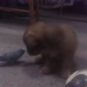 Parrot and puppy share endearing friendship