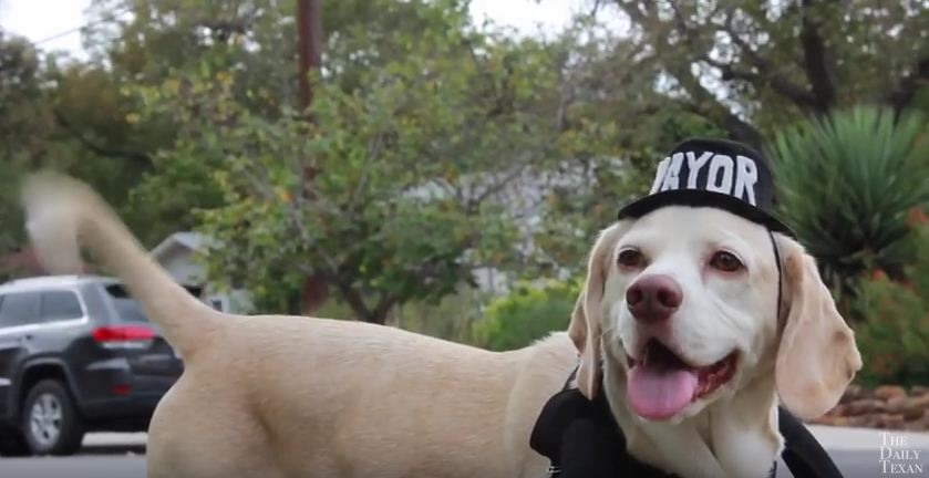 Awesome Dog Wants to Be Elected City Mayor