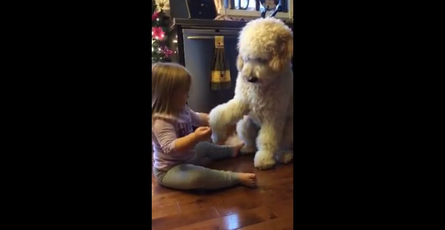 When She Sat In Front Of Her Dog, I Wasn't Expecting Something Like This — So Cute!