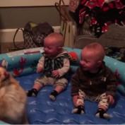 Dancing Dog Entertains Two Babies