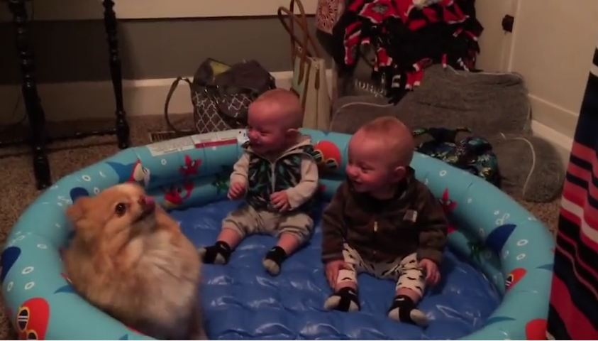 Dancing Dog Entertains Two Babies