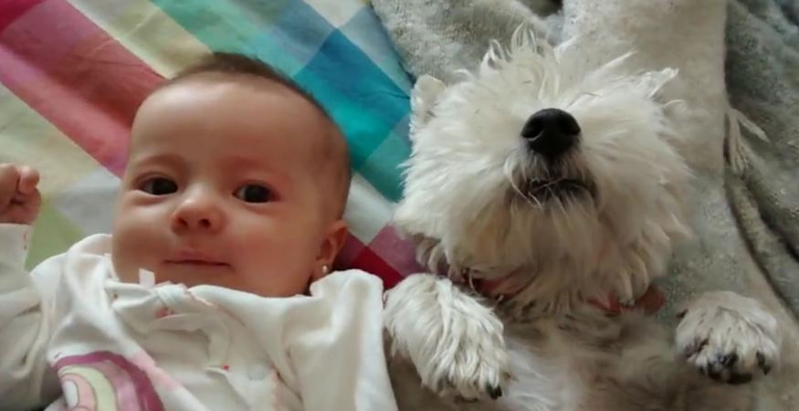 Puppy licks newborn baby