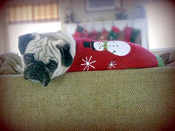 Dogs That Absolutely Hate Their Christmas Sweaters