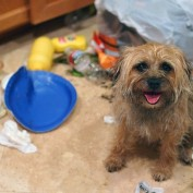 When Dogs Are Caught Stealing From the Trash