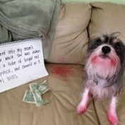 30 Dogs that Entered the Hall of Shame