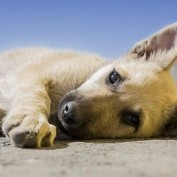 12 Reasons We Secretly Wished Dogs Stayed Puppies Furever