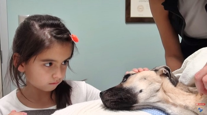 Little Girl Stares Into The Eyes Of A Dying Dog, But Then THIS Happens–Just Incredible!