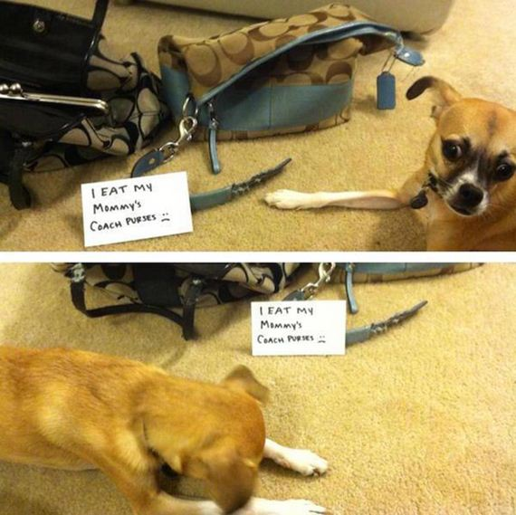 06-shame-dogs