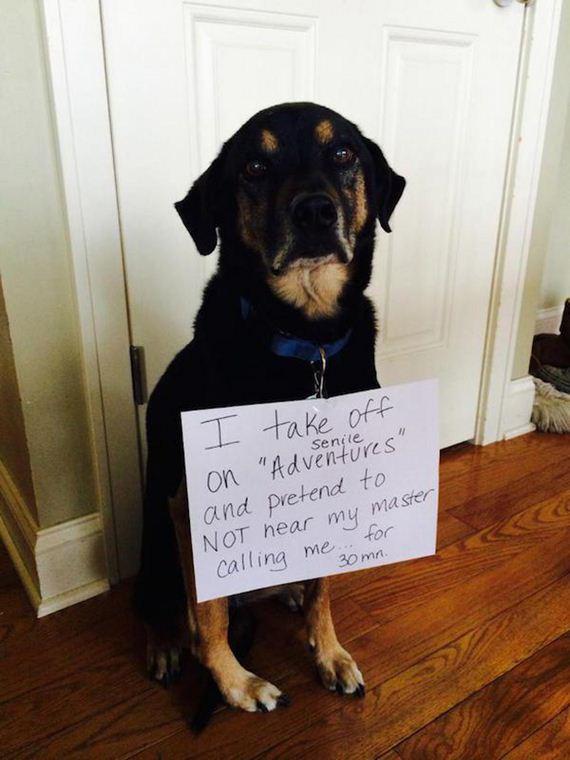 10-shame-dogs