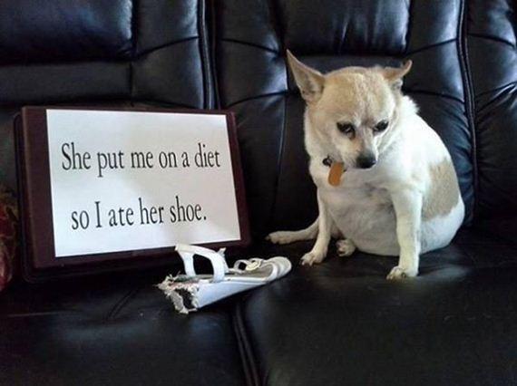 11-shame-dogs