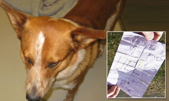 Homeless Man's Life Is Saved by His Dog, Again