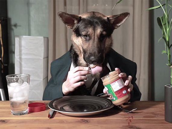13-Dogs-Human-Hands