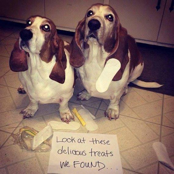 13-shame-dogs