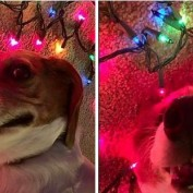 Dogs Who Definitely Didn't Peek At Their Presents