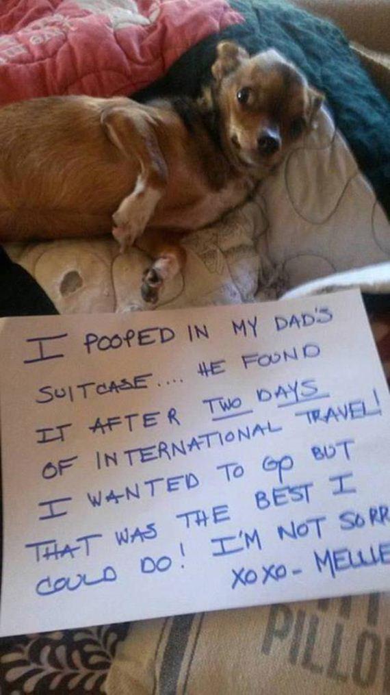 15-shame-dogs