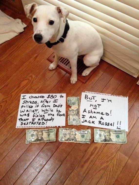 17-shame-dogs