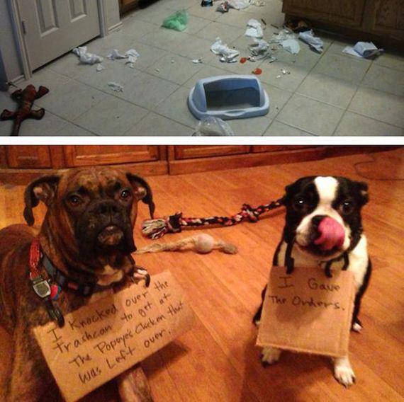 22-shame-dogs