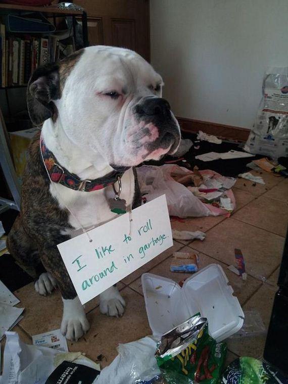 24-shame-dogs