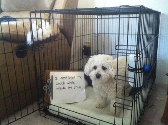25-shame-dogs