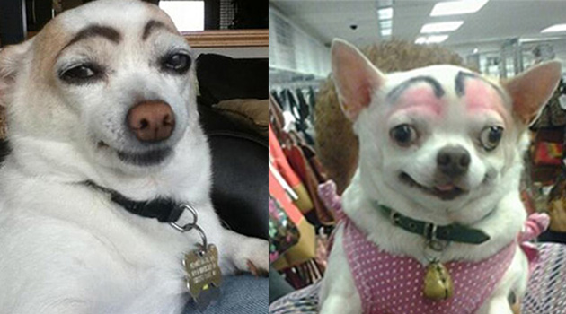 Dogs With Eyebrows Are Making a Comback