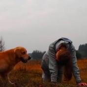 Dog refuses to perform tricks