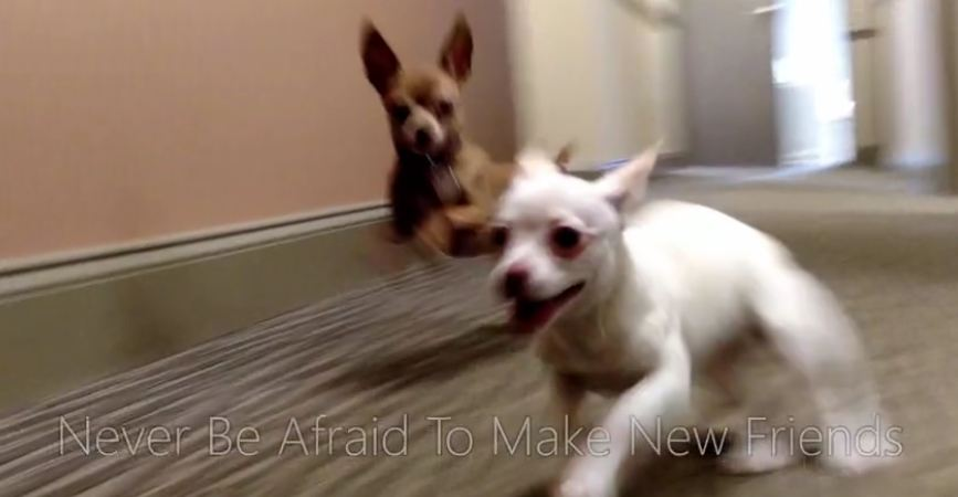 Puppies' first meeting ends in heartwarming experience