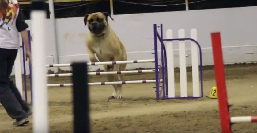 He Might Not Be the Fastest, But He Certainly Is the Cutest