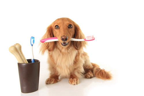 How To Get Your Dog To Sit Still For Dental Care