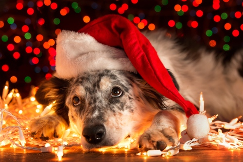 10 Ways To Celebrate Christmas With Your Fur Babies