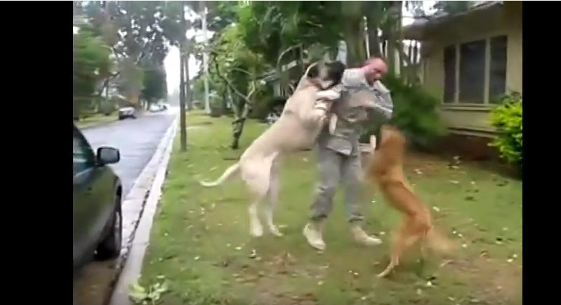 Soldier Gets The Warmest Welcome Home From The Dogs Who Never Forgot Him