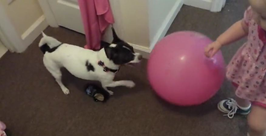 Dog attacks ball