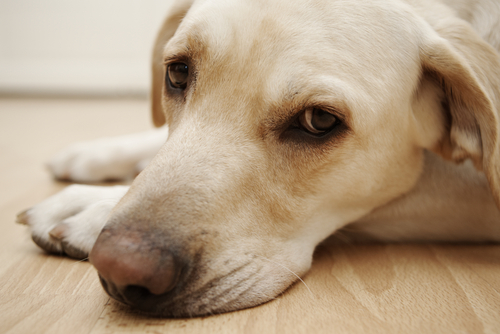 Ask A Vet: My Dog Is Sick. How Do I Know When To Go To The Vet?