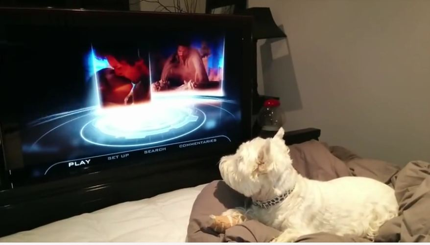 Dog couldn't care less about 'Star Wars' hype