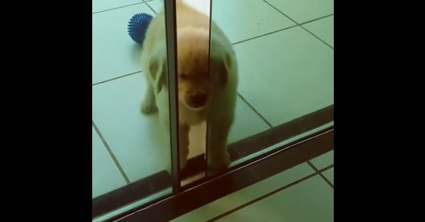 Determined puppy proves anything is possible!