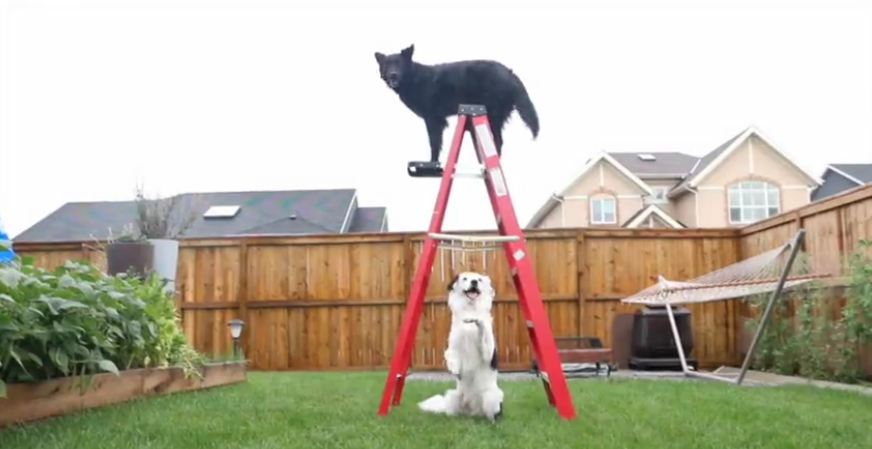 Spectacular dog tricks at iconic North American sights