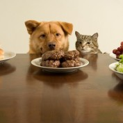 Humane Society Program Offers Assistance for Low-Income Pet Owners
