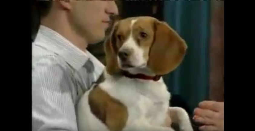 Beagle Does the Most Convincing Job of Playing Dead