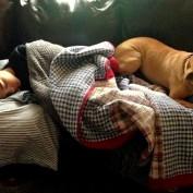 Adopted Pit Bull Saves Boy Having a Seizure