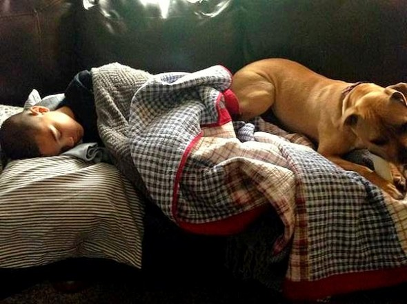 Adopted Pit Bull Saves Boy Having a Seizure