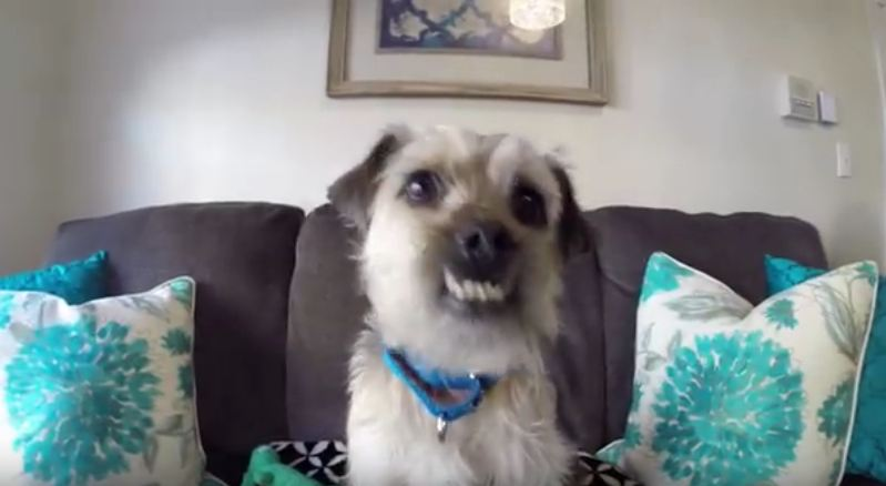 Abused Dog Smiles and Hopes to Find New Home