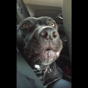 """Dog Sings Along to New Adele Song """"Hello"""""""