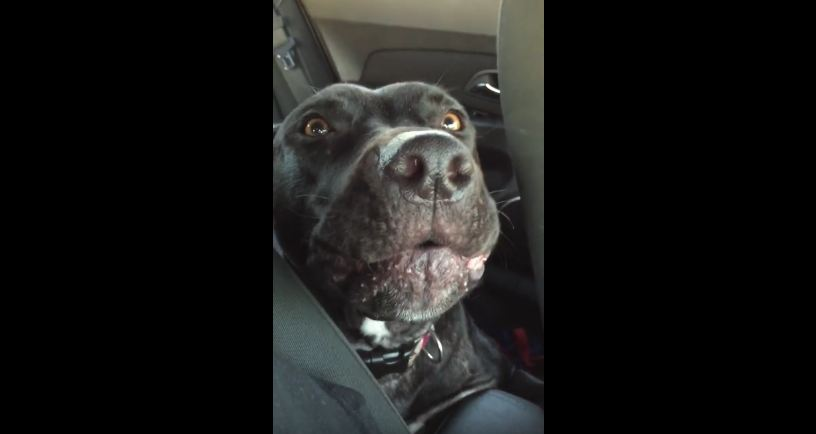 "Dog Sings Along to New Adele Song ""Hello"""