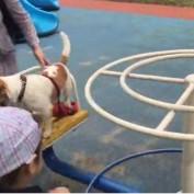 Dog casually enjoys ride on a carousel