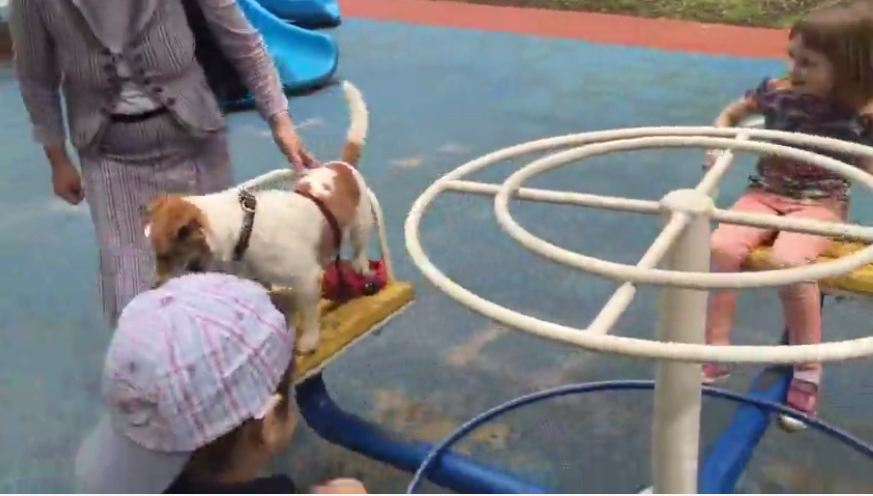 Dog casually enjoys ride on a carousel