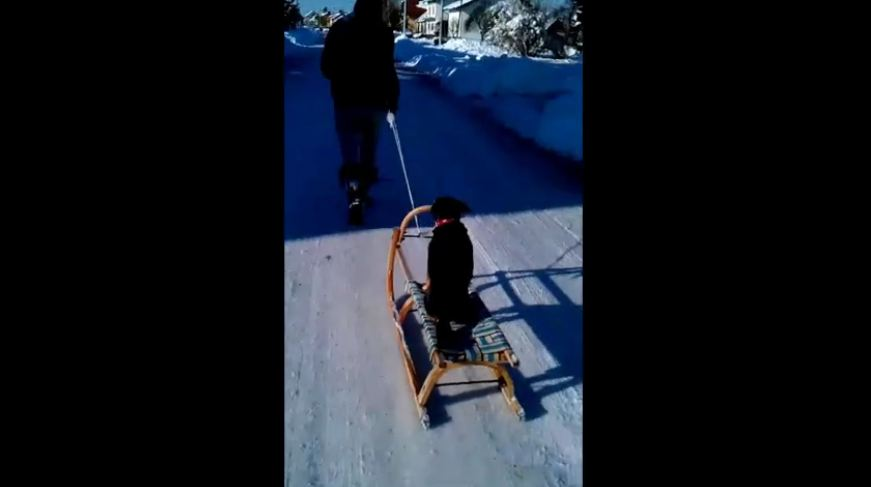 Dog enjoys sleigh ride