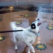 Playful dog humorously enjoys water fountain