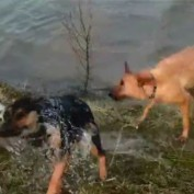 Dogs enjoy playful time in water