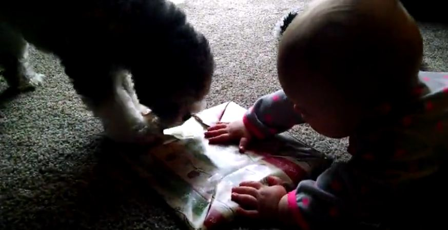Puppy helps baby open Christmas present