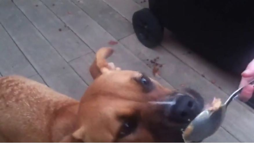 Dog hilariously tries peanut butter