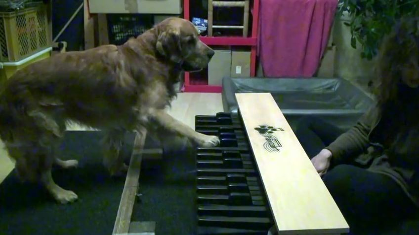 A Pair Of Cute Dogs Show Off Their Pitch-Perfect Music Skills